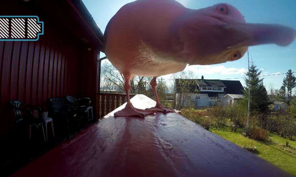 Γλάρος αρπάζει την κάμερα και αυτό που ακολουθεί είναι απλά... μαγικό! (vid)