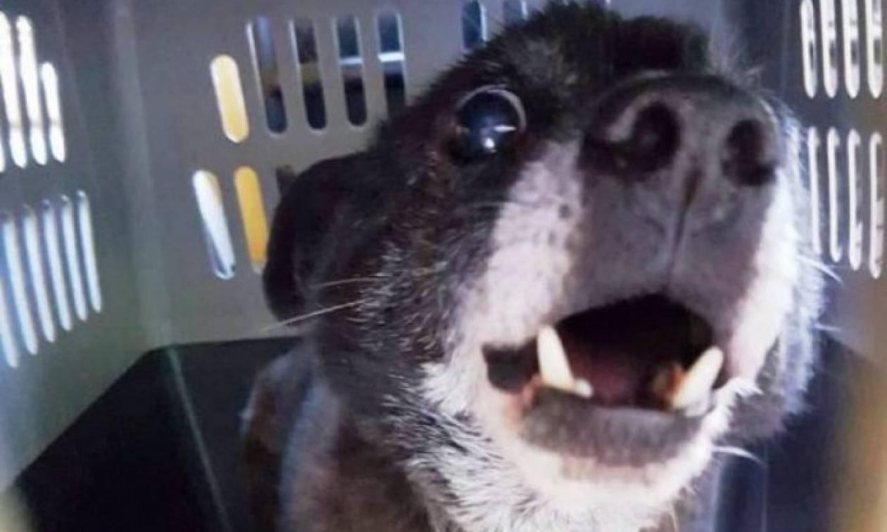 Συγκλονιστική ιστορία αγάπης στην Κρήτη - Δεν πήγαινε στο γηροκομείο για να μην αφήσει τον σκύλο της