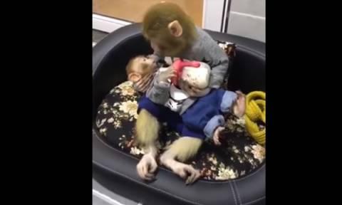 Απίστευτα τρυφερή στιγμή: Μαμά μαϊμουδίτσα ταΐζει με μπιμπερό το μωρό της (vid)