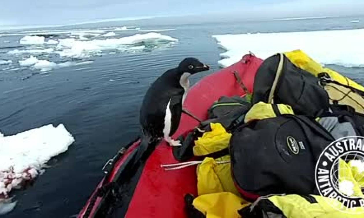 Εκανε βόλτα με τη βάρκα του στην Ανταρκτική όταν ξαφνικά... (video)