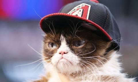 Γνωρίστε την πιο «ξινισμένη» και πλούσια γάτα στον κόσμο (pics)