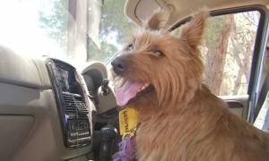 Η παράξενη είδηση της ημέρας: Σκύλος διανύει 1.500 χλμ. κάνοντας ωτοστόπ (Pics)