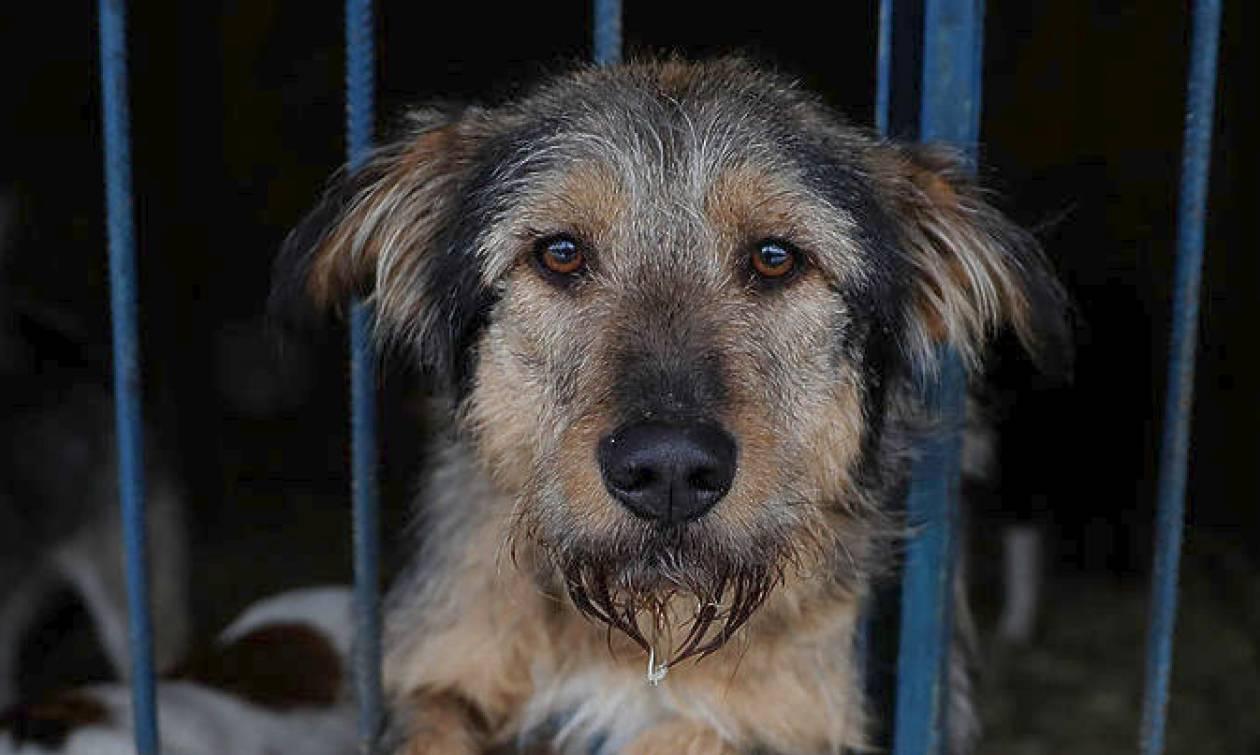 Ζάκυνθος: Συνελήφθη 34χρονος που πυροβόλησε και τραυμάτισε αδέσποτο σκύλο