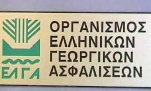 ΕΛΓΑ: Σήμερα (1/2) οι αποζημιώσεις σε αγρότες ύψους 20,8 εκατ. ευρώ