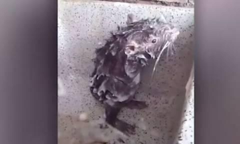 Βρήκε έναν αρουραίο στο μπάνιο της! Αυτό που έκανε, δεν το πιστεύει κανείς... (video)