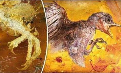 Άφωνοι οι αρχαιολόγοι: Ανακαλύφθηκε προϊστορικό πουλί παγιδευμένο μέσα σε κεχριμπάρι (Vid)
