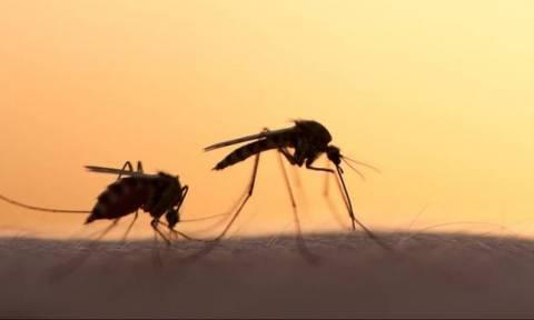 Βρήκαν τι να κάνουμε για να μας αφήσουν ήσυχους τα κουνούπια!