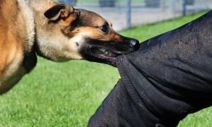 Ηράκλειο: Σκύλος επιτέθηκε σε άνδρα κοντά σε παιδική χαρά – Εικόνες - ντοκουμέντο