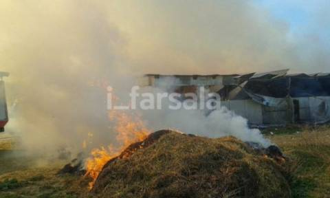 Πυρκαγιά έκαψε ποιμνιοστάσιο και ζώα στα Φάρσαλα