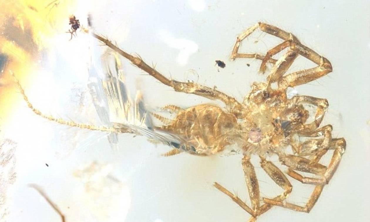 Απίστευτη ανακάλυψη: Βρέθηκε αράχνη με... ουρά, ηλικίας 100 εκατ. ετών!