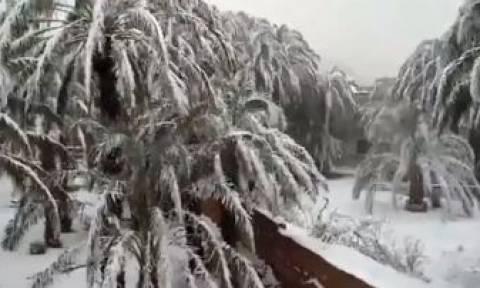 Κακοκαιρία Μαρόκο: Κλειστά σχολεία και αποκλεισμένα χωριά από το χιόνι! (pics+vid)
