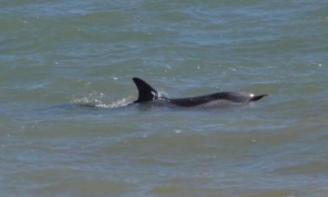 Νεκρό δελφίνι στο Ληξούρι Κεφαλονιάς