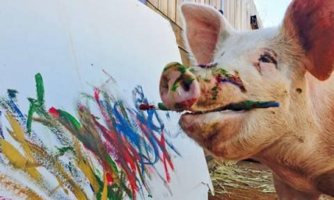 Απίστευτο και όμως αληθινό! Δείτε το γουρούνι, που ζωγραφίζει (video)