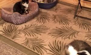 Γιαγιά νόμιζε ότι φροντίζει 3 γάτες μέχρι που ο εγγονός είδε ότι η τρίτη ήταν... (pics)