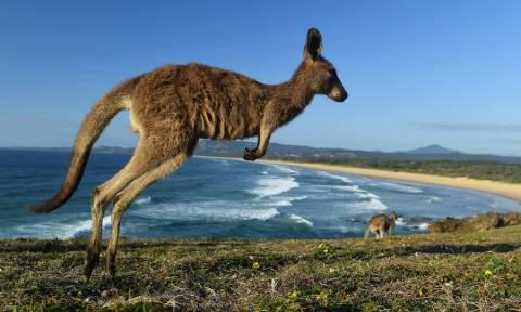 Απίστευτες εικόνες: Κυνηγός τα «έβαλε» με καγκουρό και... το μετάνιωσε πικρά! (pic)