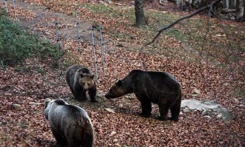 Θεσσαλονίκη: Το αρκουδάκι που βγήκε προς πώληση στο διαδίκτυο (pic)