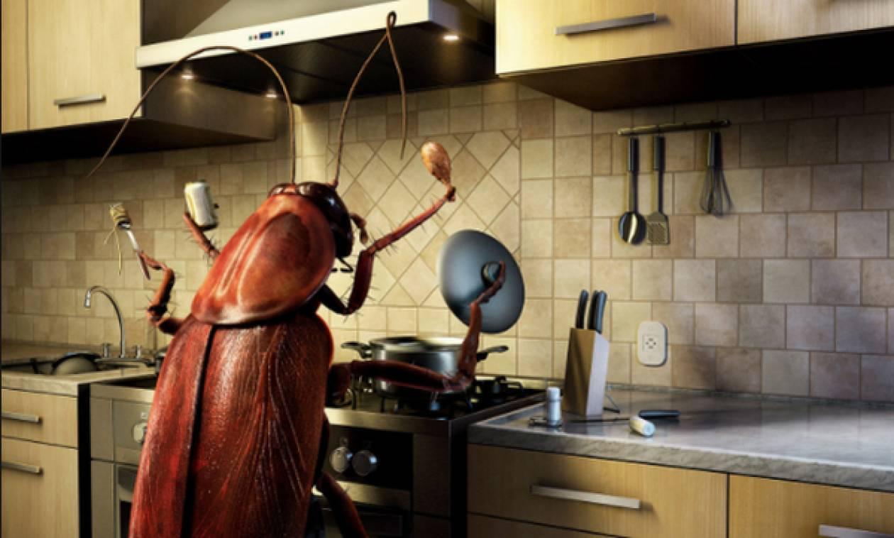 Δείτε ποιοι είναι οι 5 τρόποι για να απαλλαγείτε μία και καλή από τις κατσαρίδες