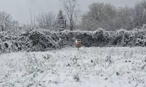 Κακοκαιρία: Δείτε σε ποια πόλη το χιόνι έφτασε το ένα μέτρο (vid)