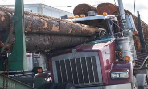 Άγιο είχε! Κορμοί δέντρων διαπέρασαν το παρμπρίζ και ο οδηγός βγήκε… χωρίς γρατζουνιά! (vid)