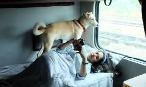 Το ζευγάρι που ταξιδεύει με τους σκύλους του σε μια χώρα όχι τόσο φιλική για τα κατοικίδια