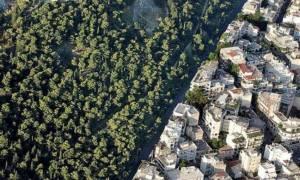 Νέες διευκρινήσεις για τους Δασικούς Χάρτες από τον ΟΠΕΚΕΠΕ