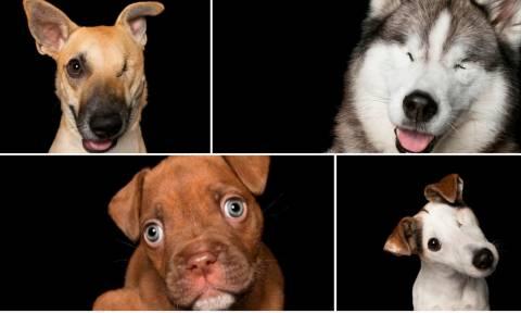Προβληματικός είναι εκείνος που νομίζει ότι AYTA τα σκυλιά έχουν πρόβλημα! (pics)