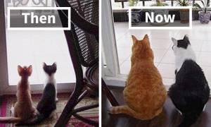Viral: 30 καταπληκτικές «πριν και μετά» φωτογραφίες κατοικίδιων που μεγάλωσαν μαζί