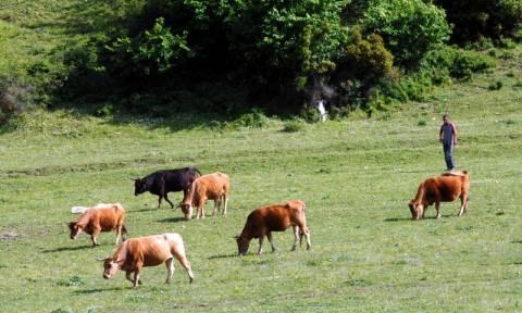 Βιολογική κτηνοτροφία: Από 26 Μαρτίου οι αιτήσεις του Μέτρου 11 «Βιολογικές Καλλιέργειες»