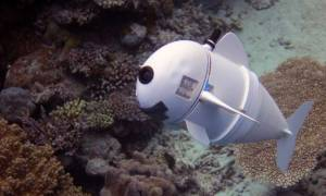 SoFi: Αυτό είναι το πρώτο ρομποτικό ψάρι που ξεγελά ακόμη και τα αληθινά (Vids)