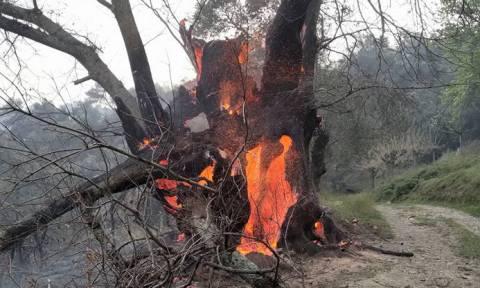 Φωτιά: Πύρινη κόλαση στα Χανιά - Απειλούνται σπίτια - Απεγκλωβισμός ατόμων στην Κίσσαμο