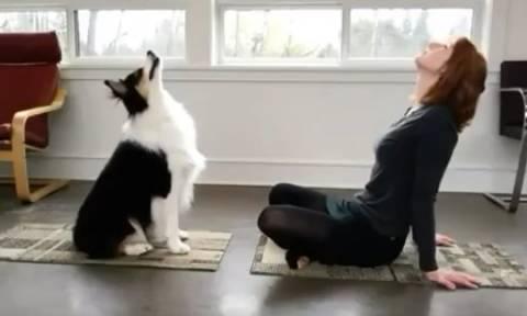 Απίστευτος σκύλος! Κάνει γιόγκα και... σαρώνει στο διαδίκτυο! (video)