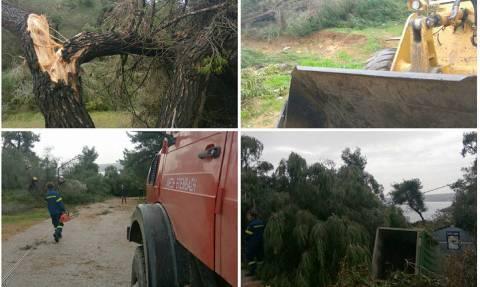 Ανεμοστρόβιλος «χτύπησε» τη Χαλκιδική – Πλημμύρες και καταστροφές στη Θάσο (vid&pics)