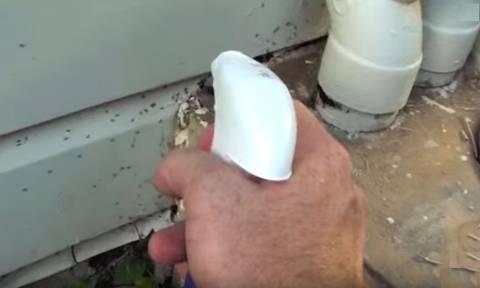 Μόλις δείτε τι κάνει για να απαλλαγεί από τα μυρμήγκια θα το δοκιμάσετε και εσείς!