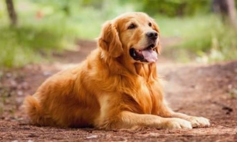 Απέσυρε η κυβέρνηση το νομοσχέδιο για τα ζώα συντροφιάς