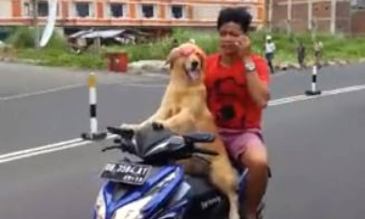 Βίντεο – έπος: Ο σκύλος… easy rider που οδηγά μηχανάκι!