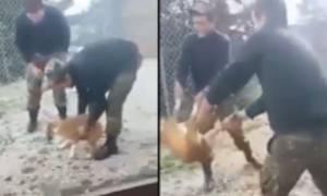 В Греции солдаты сбросили бродячую собаку с обрыва
