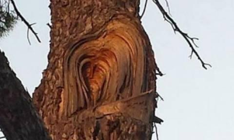 Εμφανίστηκε το πρόσωπο του Χριστού πάνω σε δέντρο!