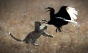 Αρπακτικά πουλιά σκότωσαν τις γάτες του και η εκδικητική του αντίδραση σόκαρε τους δικαστές