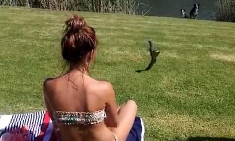 Εκανε την ηλιοθεραπεία της όταν ξαφνικά πετάχτηκε πάνω της μια κόμπρα... (video)