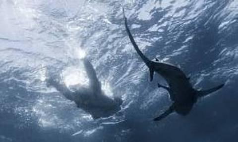 Μην κοιτάξεις στο νερό! Καρχαρίες κολυμπούν κάτω από ανυποψίαστο σέρφερ (pics)