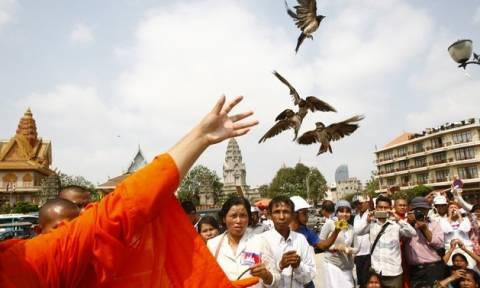 Καμπότζη: 7.000 σπάνια πουλιά γεννήθηκαν με ασφάλεια!
