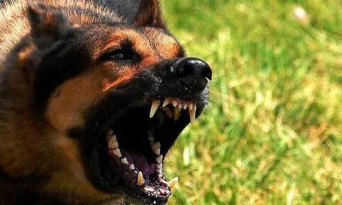 Κρήτη: Σκύλος επιτέθηκε σε 6χρονο παιδάκι - Υπεβλήθη σε εγχείρηση