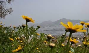 Καιρός - H EMY προειδοποιεί: Έρχεται «μίνι» καλοκαίρι – Απίστευτο πόσο θα φτάσει η θερμοκρασία