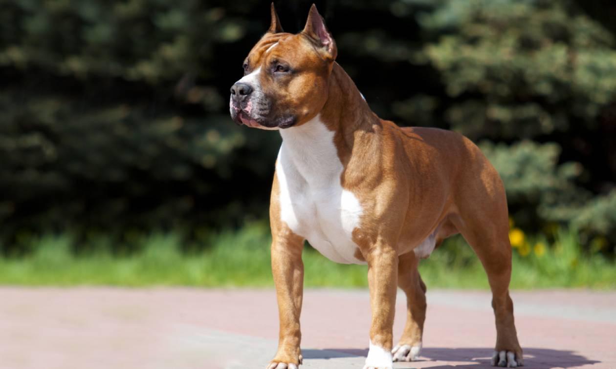 66af94d15f4 Τραγωδία: Σκύλος σκότωσε επτά μηνών βρέφος - Newsbomb - Ειδησεις - News