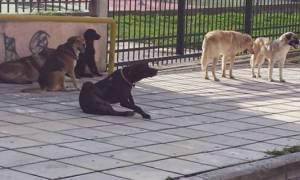 Λαμία: Αδέσποτος σκύλος δάγκωσε 9χρονη - Μήνυση καταθέτει ο πατέρας