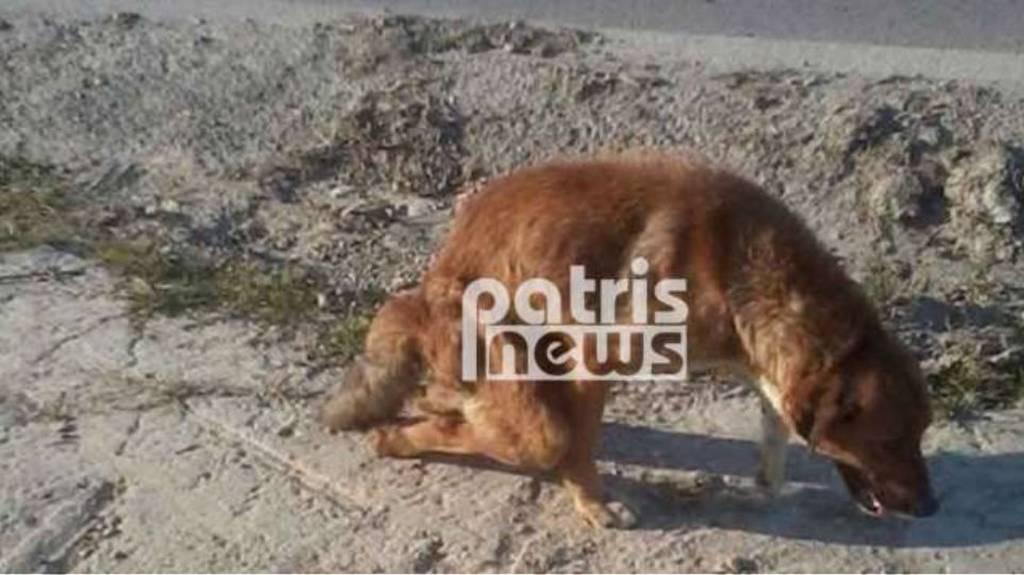 Απάνθρωπο: Έσπασαν τα πόδια σε σκύλο και τον παράτησαν αβοήθητο (εικόνες σοκ)
