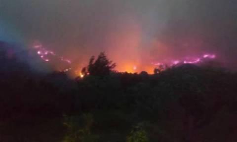 Φωτιά: Εκκενώνονται σπίτια στην Ηλεία - Πύρινος «εφιάλτης» στη Φρίξα (pics+vid)