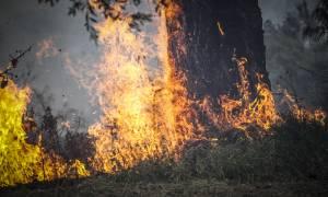 Φωτιά LIVE - Ηλεία: Σε ύφεση η μεγάλη πυρκαγιά - Ολυνύχτια η «μάχη» με τις φλόγες (pics&vids)