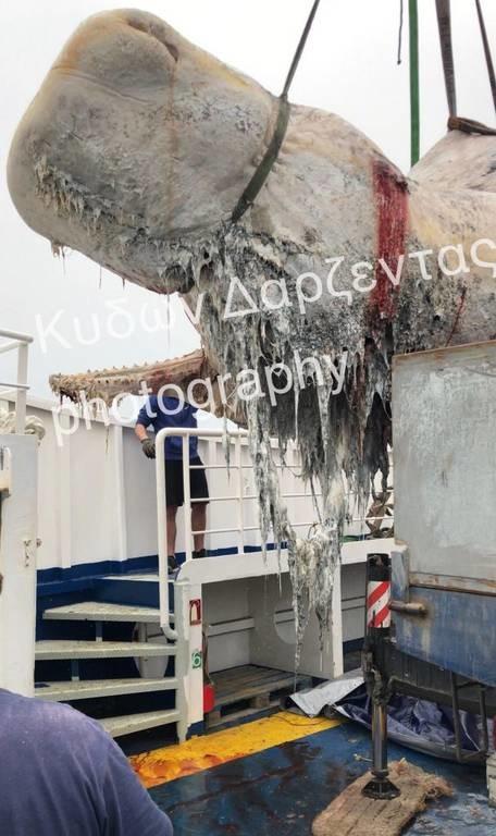 «Πάγωσαν» όταν άνοιξαν το στομάχι της τεράστιας φάλαινας που ξεβράστηκε στη Σαντορίνη (photos)