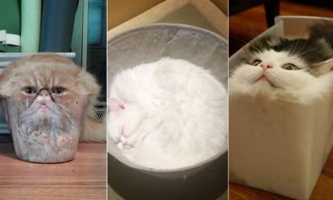 Απίστευτες γάτες σε ακόμη πιο απίστευτες φωτογραφίες!